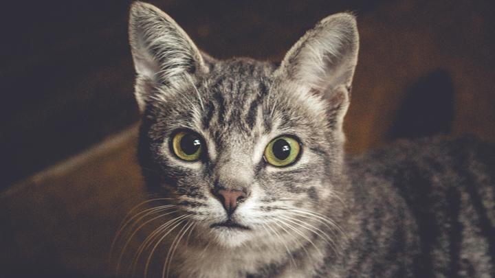 nariz-gatos