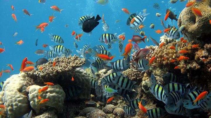 peces-estres