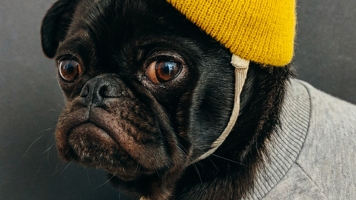 perros-abrigo