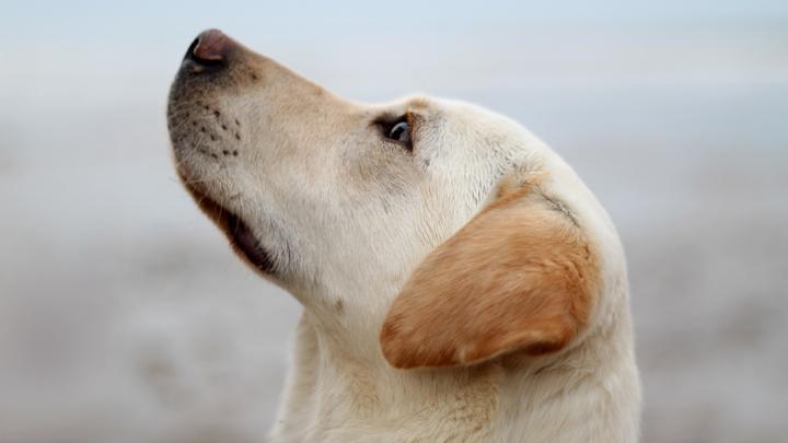 perros-curiosidades