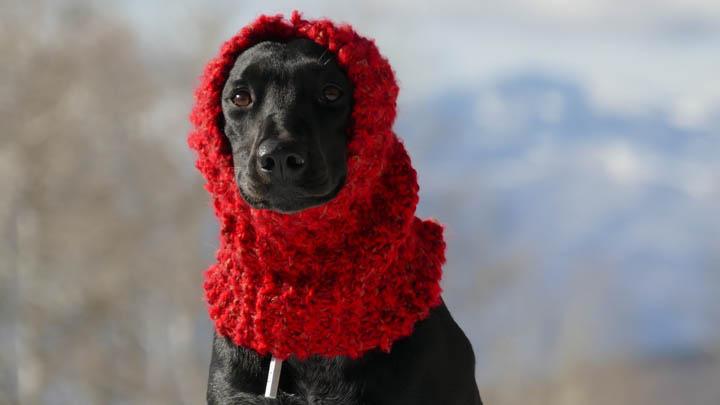perros-frio
