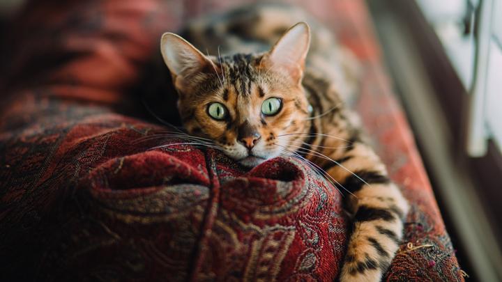 gatos-ojos