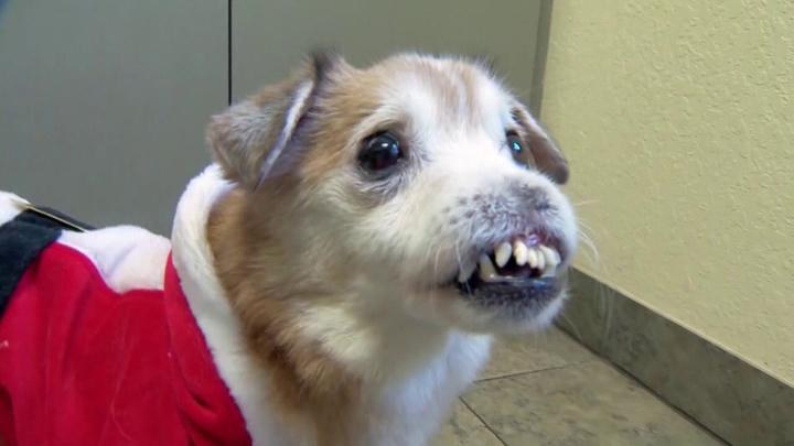 perro-sin-nariz