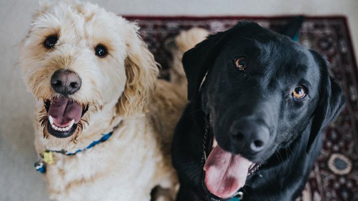 perros-nombres