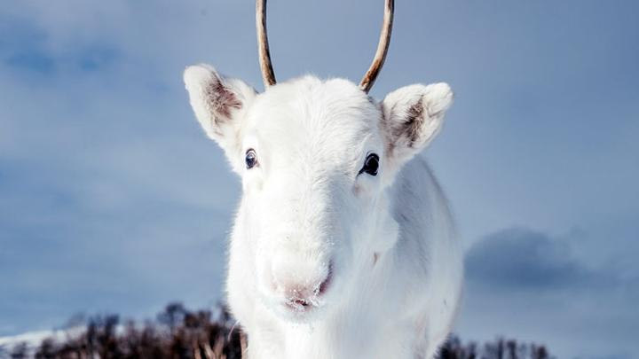 reno-blanco
