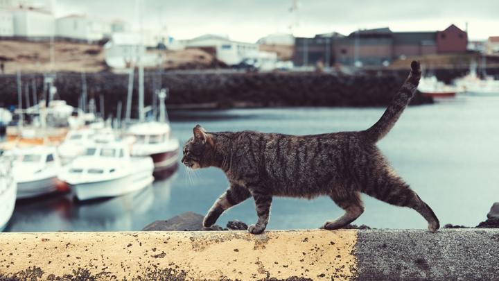 sindrome-gato-volador