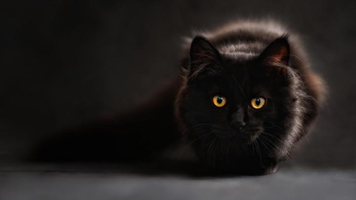 causas-estres-gatos