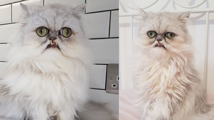 gato-terrorifico