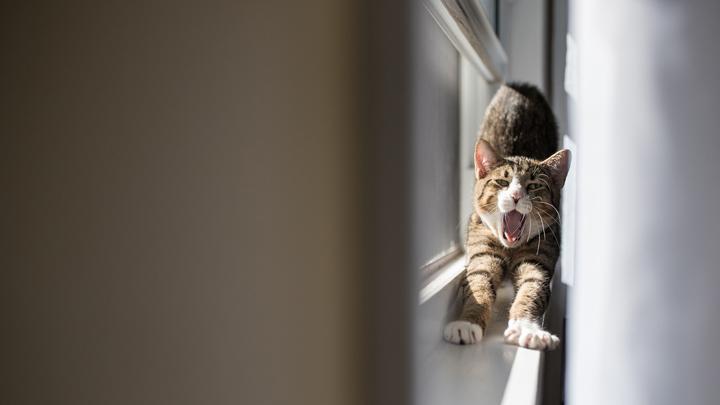 estres-gatos