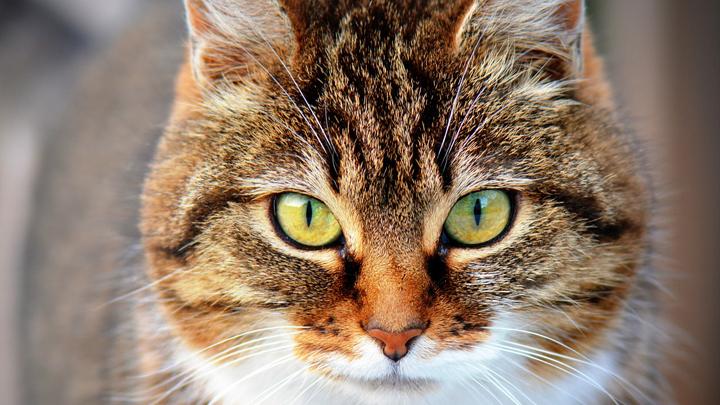 ojos-gato