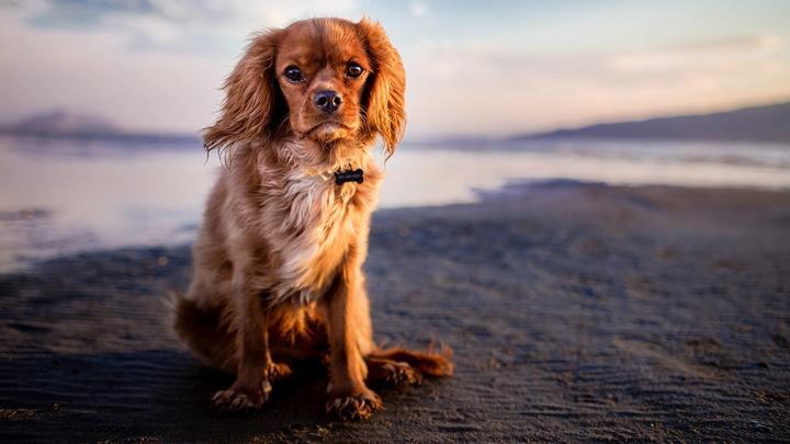 alzheimer-perros