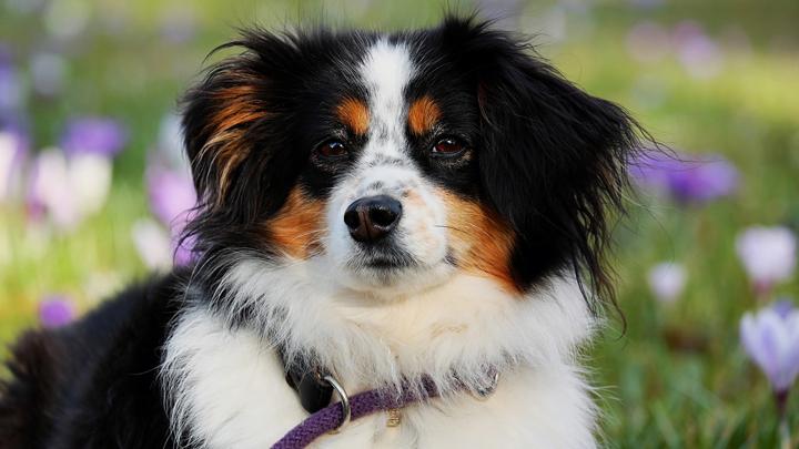 perros-mitos