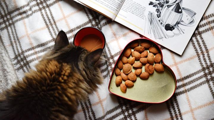 alimentacion-mascotas-senior
