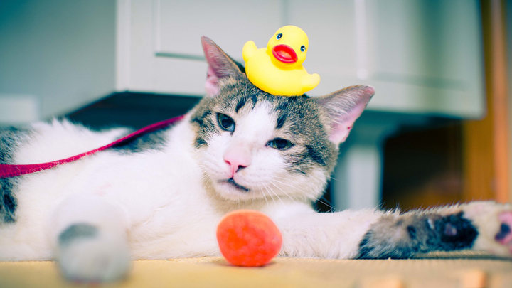 errores-higien-gato