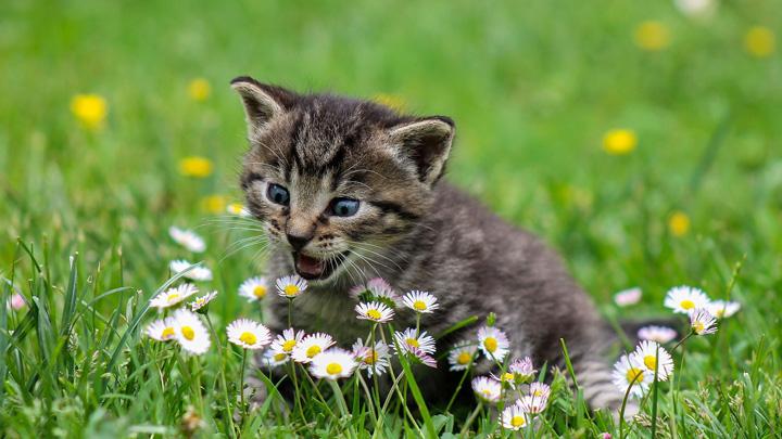 gatos-comportamiento