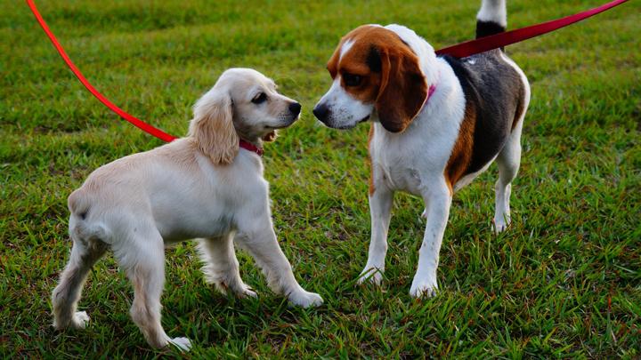 perros-fertilidad