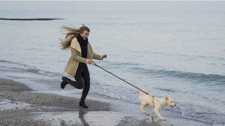 perros-running