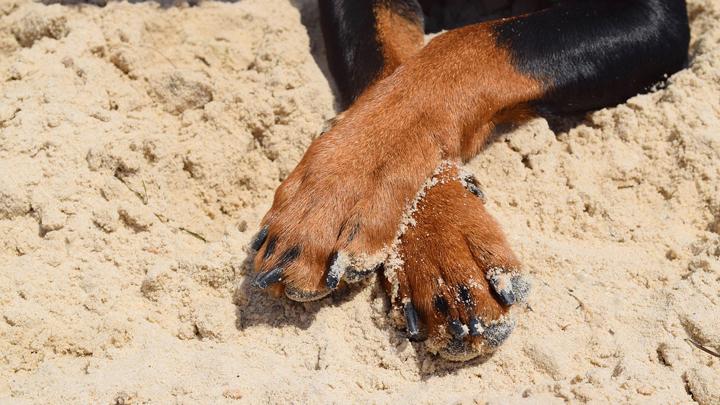 almohadillas-perros