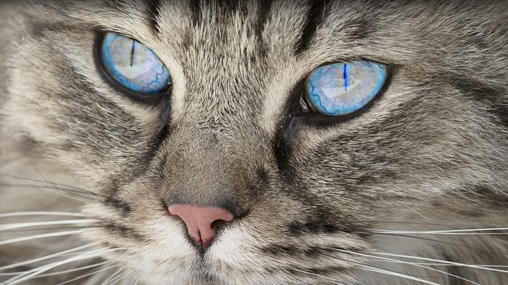 gatos-manias