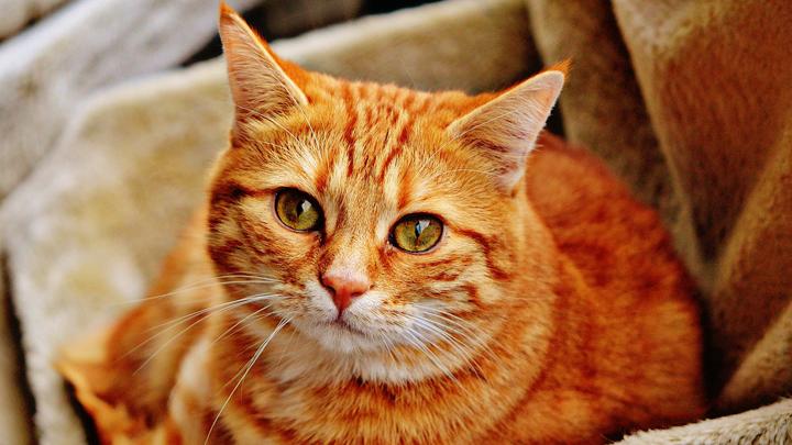 gatos-orina