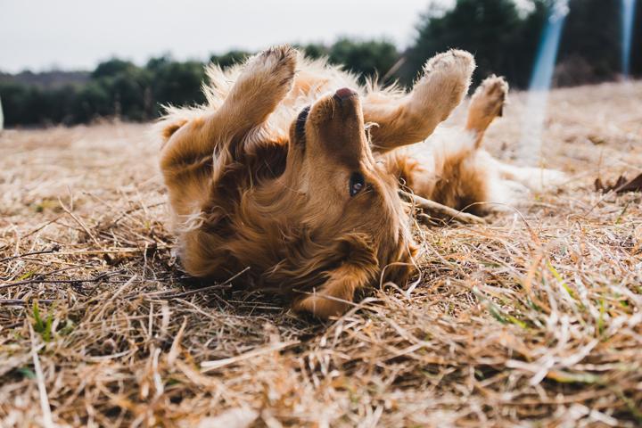 perros-caracter