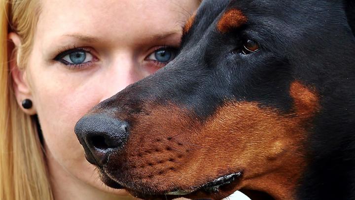 perros-defensa