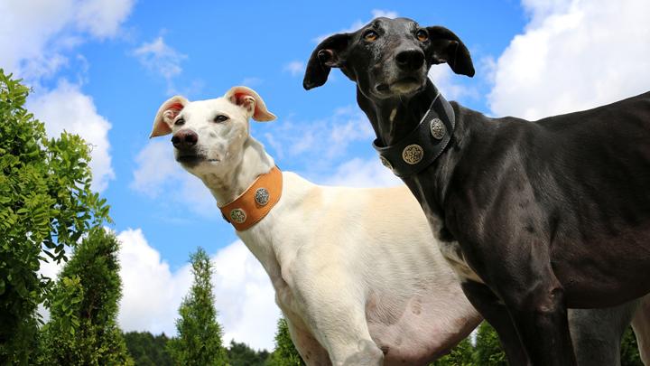 perros-independientes