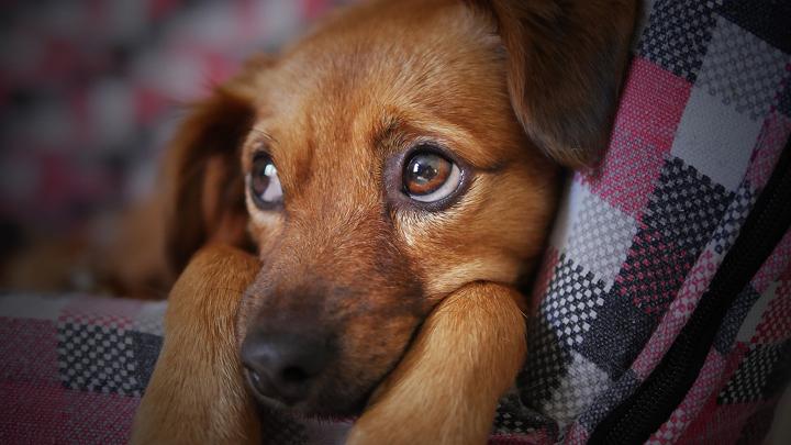 perros-paises