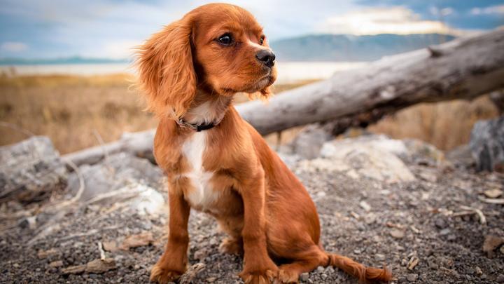 perros-inteligentes