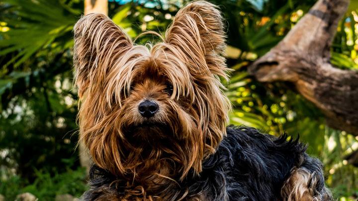 perros-alergia