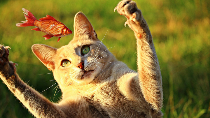 gatos-comida