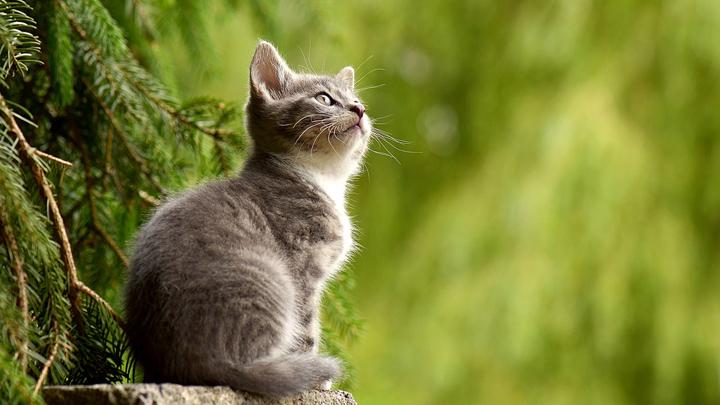 olor-gato