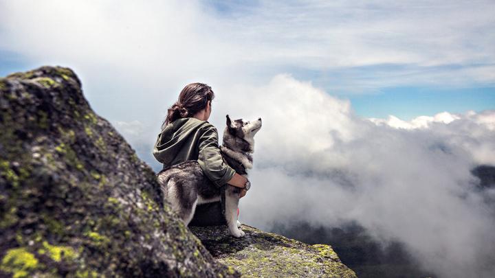 perros-afecto