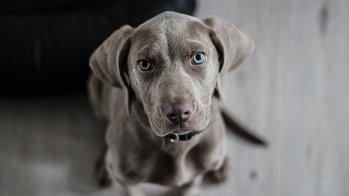 perros-felicidad