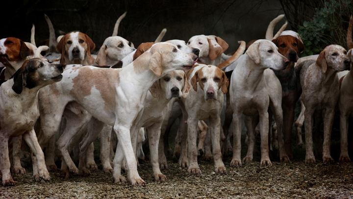 perros-habitos