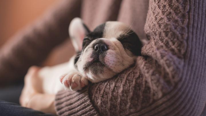 seguros-decesos-mascotas