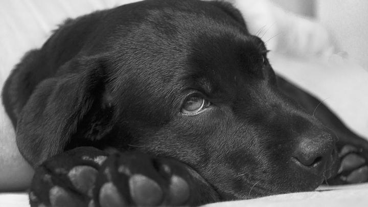 perros-epilepsia