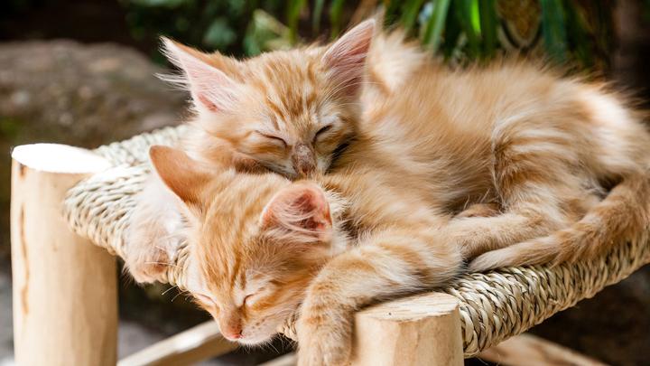 gatos-color