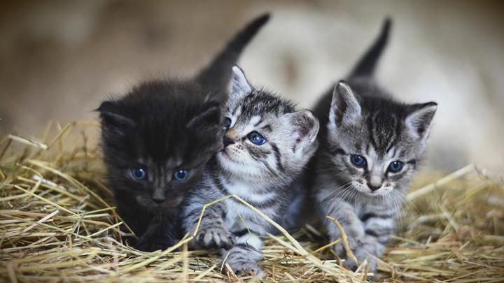 gatos-cuidados