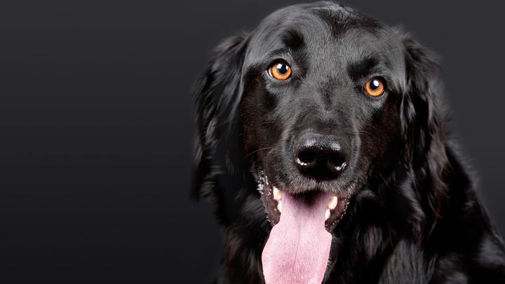 perros-ojos