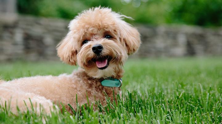 perros-faciles-adiestrar