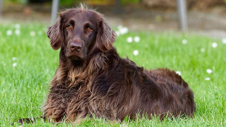 perros-hierba