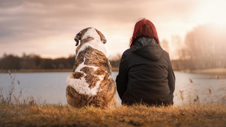 valores-perros
