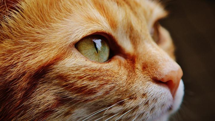 gatos-demencia-senil