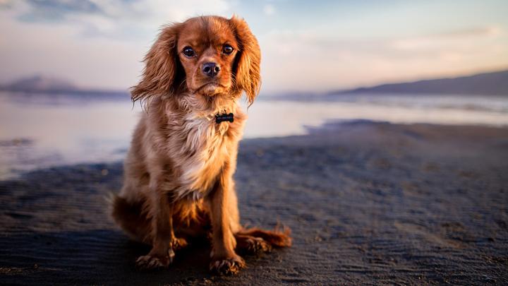 articulaciones-perros