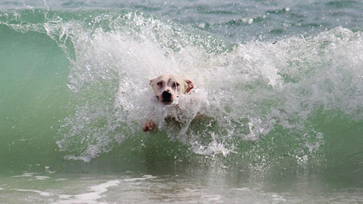 perros-playa