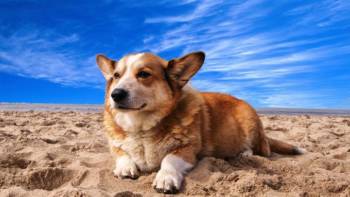 perros-playas-valencia