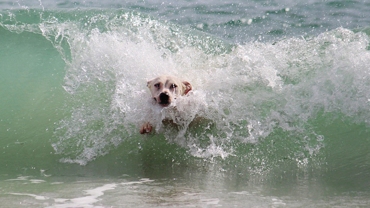 perros-playas-verano-2019