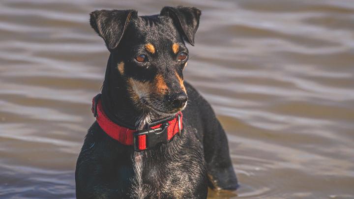 playas-perro-valencia