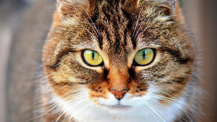 gatos-estres